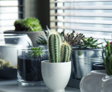 How to care for your succulents in winter