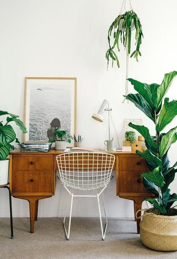 Inspiring office space with lots of plants