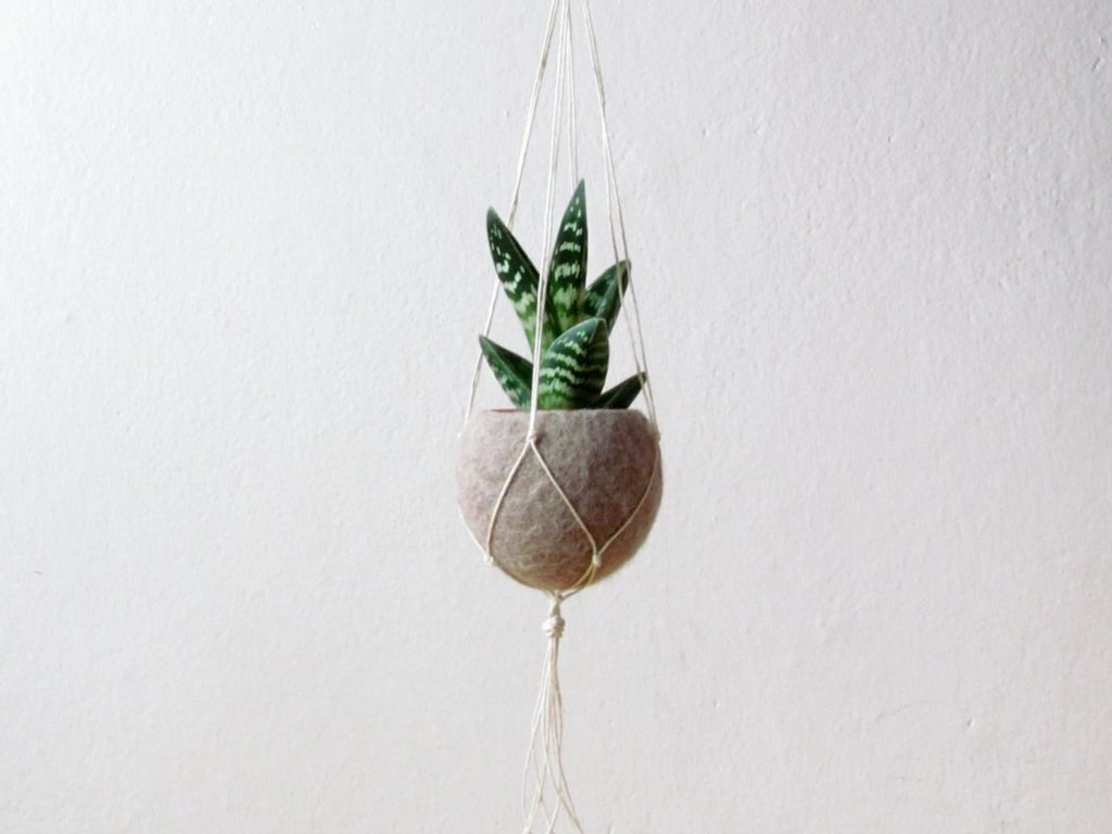 Indoor plants that are easy to keep alive!