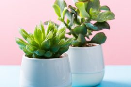 Succulent in white pot The style index