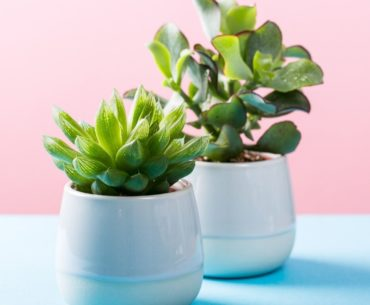 How to pick the right plant pot – Size does matter!