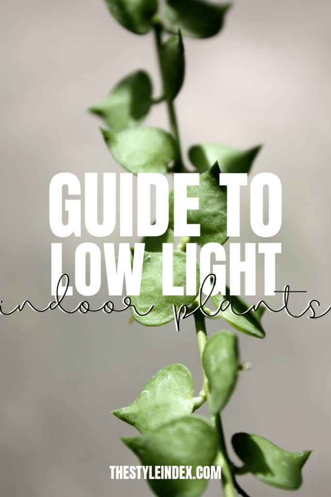 guide to low light plants