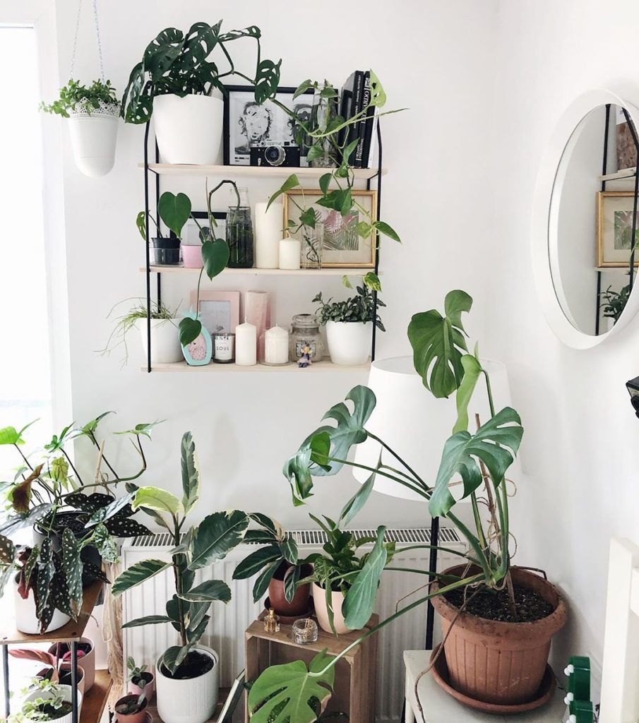indoor plants how to care