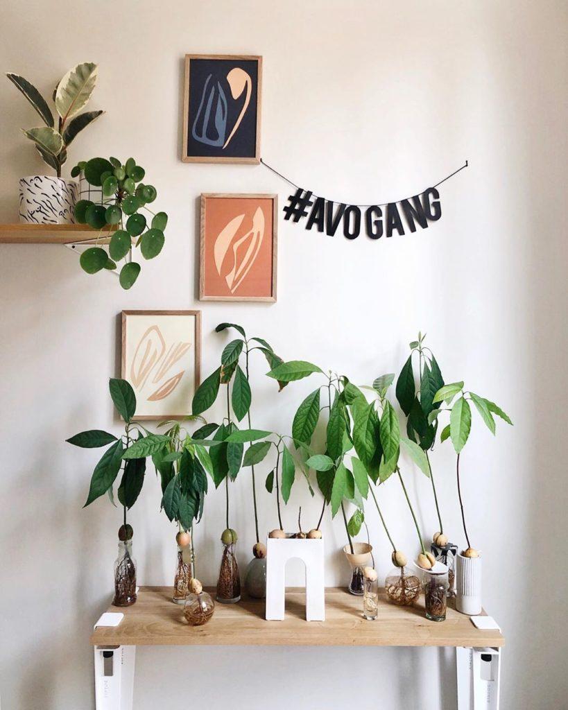 green thumb indoor plants low light