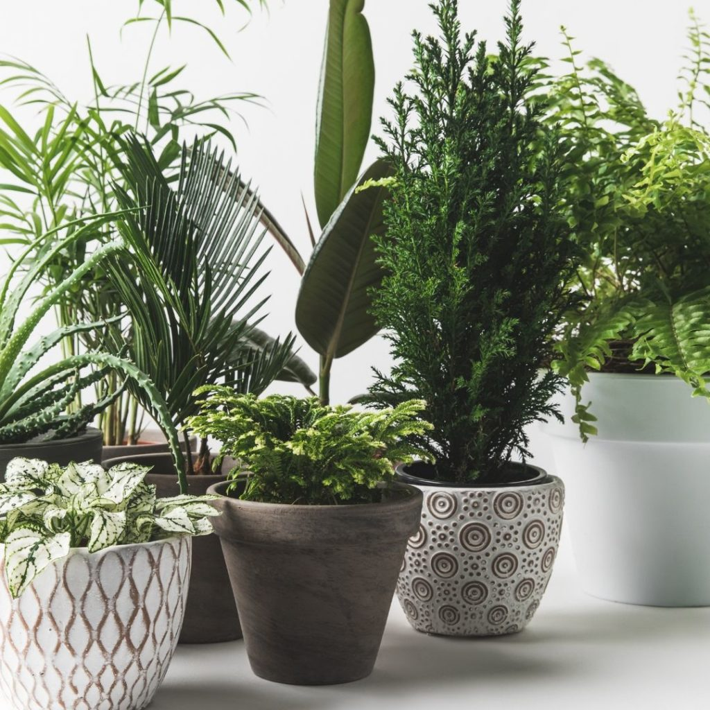 Guide to low light indoor plants