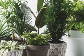 Indoor plants that love low light