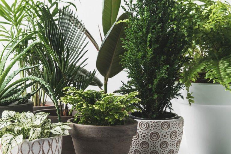Indoor plants that love low light