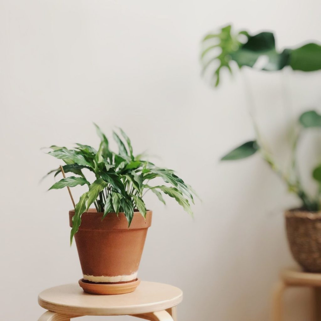 Are your plants toxic? Guide to safe indoor plants