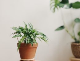 toxic indoor plants