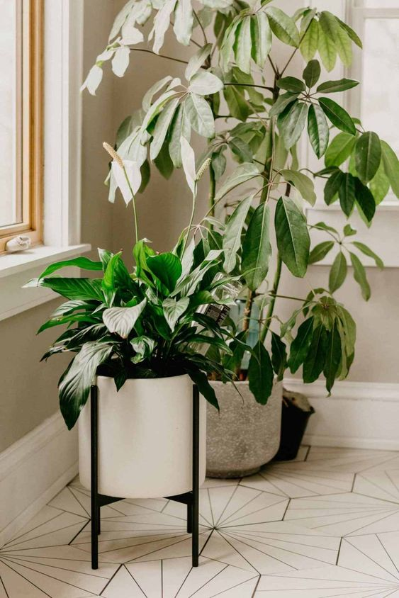 lily indoor plants could be toxic