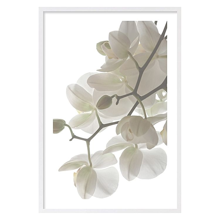 frame orchid plant print