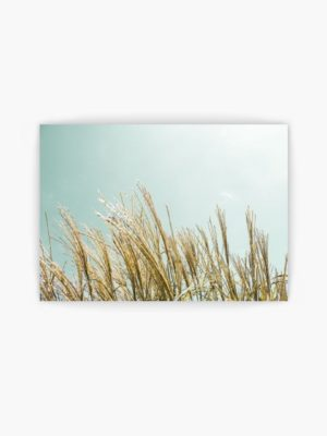 Sky and Grass free printables