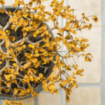 Why your plants keep ying