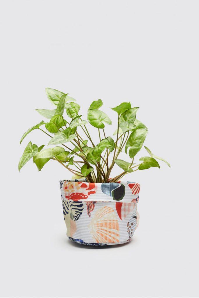colourful planter