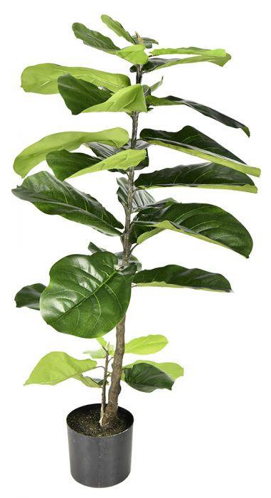 faux fiddel plant