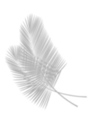 Palm Leaf Shadow free clipart