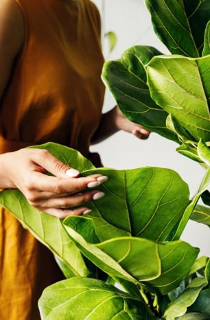 Why your indoor plants leaves keep turning brown