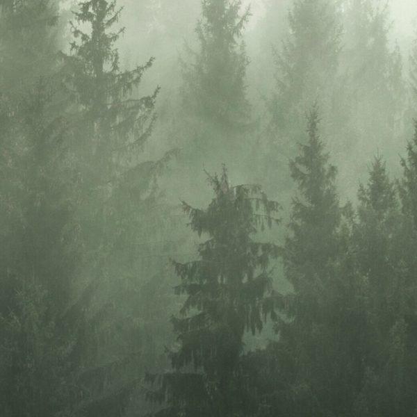 aMisty Forest Set Free Prints