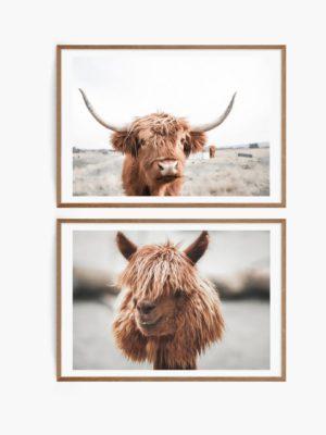 Highland Cow and Lama Set Free Prints