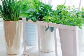 Easy to grow herbs!