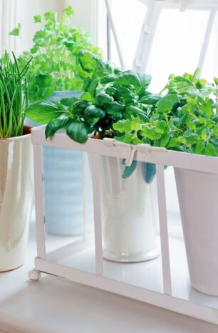Growing herbs doesn't have to be complicated! Easy-to-grow herbs